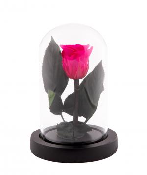 Վարդ «EM Flowers» հավերժական մուգ վարդագույն 13 սմ կոլբայով