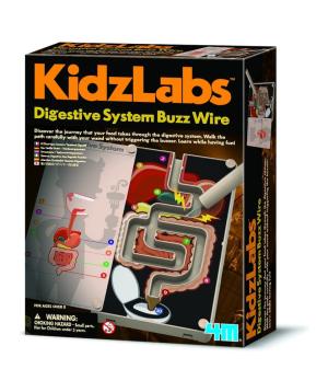 Հավաքածու «KidzLabs» մարսողական համակարգ