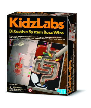 Collection `KidzLabs` digestive system