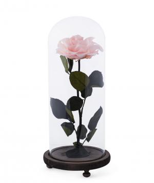 Վարդ «EM Flowers» հավերժական վարդագույն 33 սմ