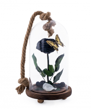 """Rose """"EM Flowers"""" eternal black 30 cm with a butterfly"""