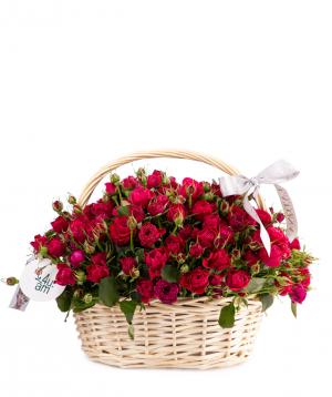 Composition `Medea` bush roses