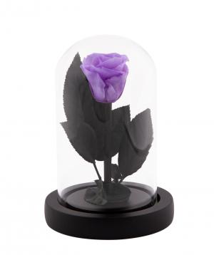 """Rose """"EM Flowers"""" eternal purple 13 cm in a flask"""