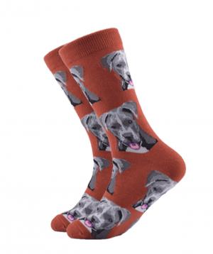 Գուլպաներ «Zeal Socks» շուն