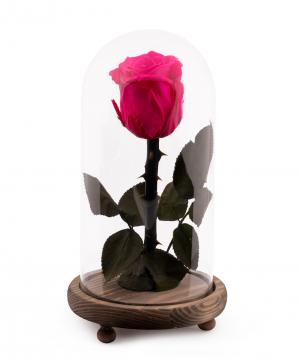 Վարդ «EM Flowers» հավերժական վարդագույն 23 սմ կոլբայով