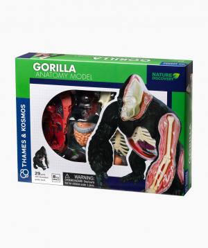 THAMES & KOSMOS Educational Game Animal Anatomy: Gorilla