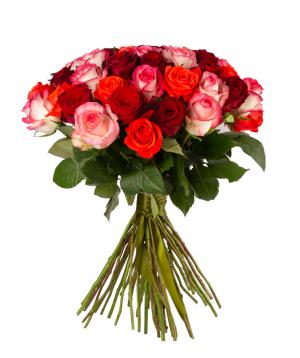 "Roses ""Gladiator, Oww, Jumilia"" mix"