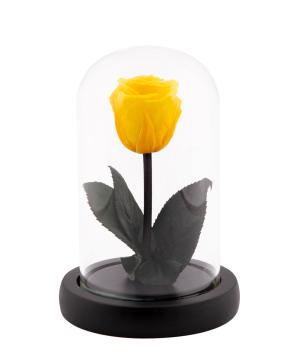 Վարդ «EM Flowers» հավերժական դեղին 13 սմ կոլբայով