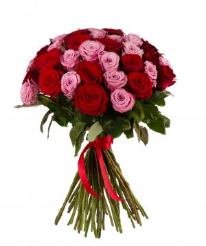Roses `Red Naomi & Maretim` mix