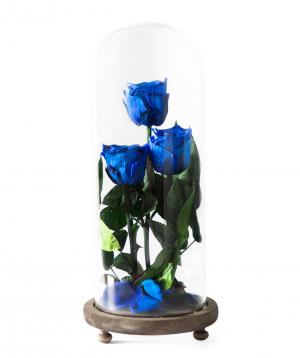 Վարդեր «EM Flowers» հավերժական կապույտ 33 սմ
