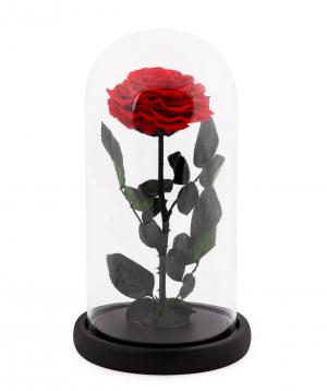 Վարդ «EM Flowers» հավերժական կարմիր 27 սմ կոլբայով