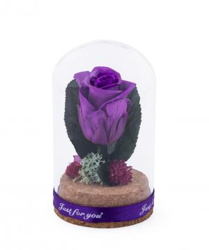 Վարդ «EM Flowers» մինի հավերժական մանուշակագույն 10 սմ
