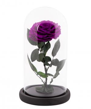 Rose `EM Flowers` eternal dark purple 27 cm in a flask