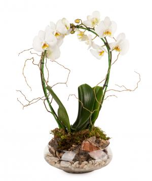 Կոմպոզիցիա «Orchid Gallery» խոլորձներով №3
