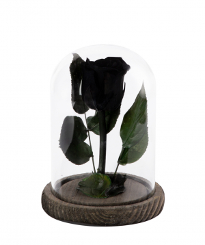 Վարդ «EM Flowers» հավերժական 17սմ