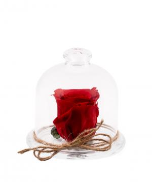 Վարդ «EM Flowers» հավերժական կարմիր 10 սմ կոլբայով
