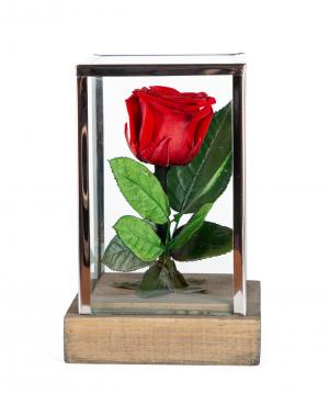 "Rose ""EM Flowers"" eternal red 18 cm"