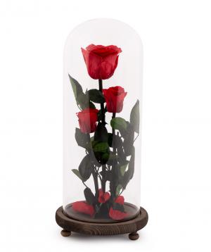 Վարդեր «EM Flowers» հավերժական կարմիր 33 սմ կոլբայով
