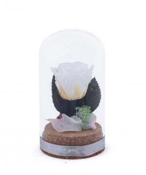 Վարդ «EM Flowers» մինի հավերժական սպիտակ 10 սմ