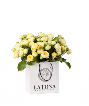 Composition `Louis Vuitton` with peony roses