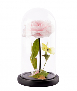 Պիոն «EM Flowers» հավերժական 27սմ վարդագույն