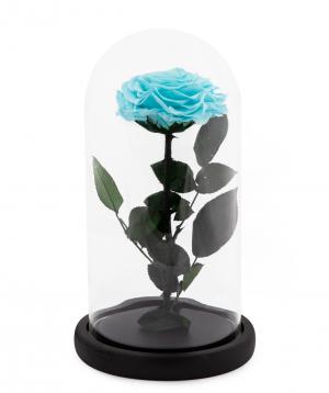 Վարդ «EM Flowers» հավերժական երկնագույն 27 սմ կոլբայով