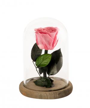 """Rose """"EM Flowers"""" eternal 17 cm"""