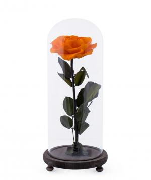 Վարդ «EM Flowers» հավերժական նարնջագույն 33 սմ